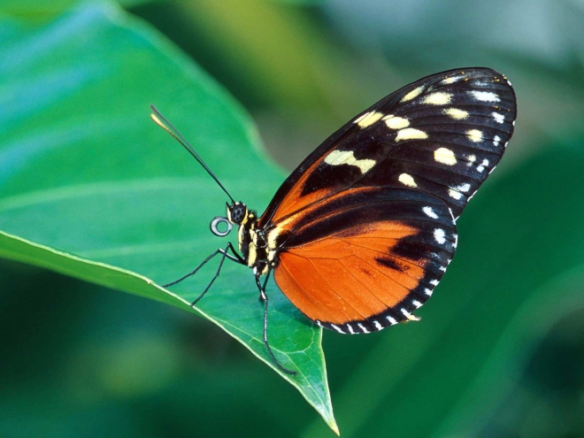 black and orange colored butterfly wallpaper