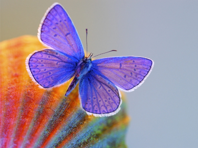blue glassy butterfly wallpaper