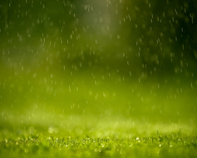 rain grass wallpaper