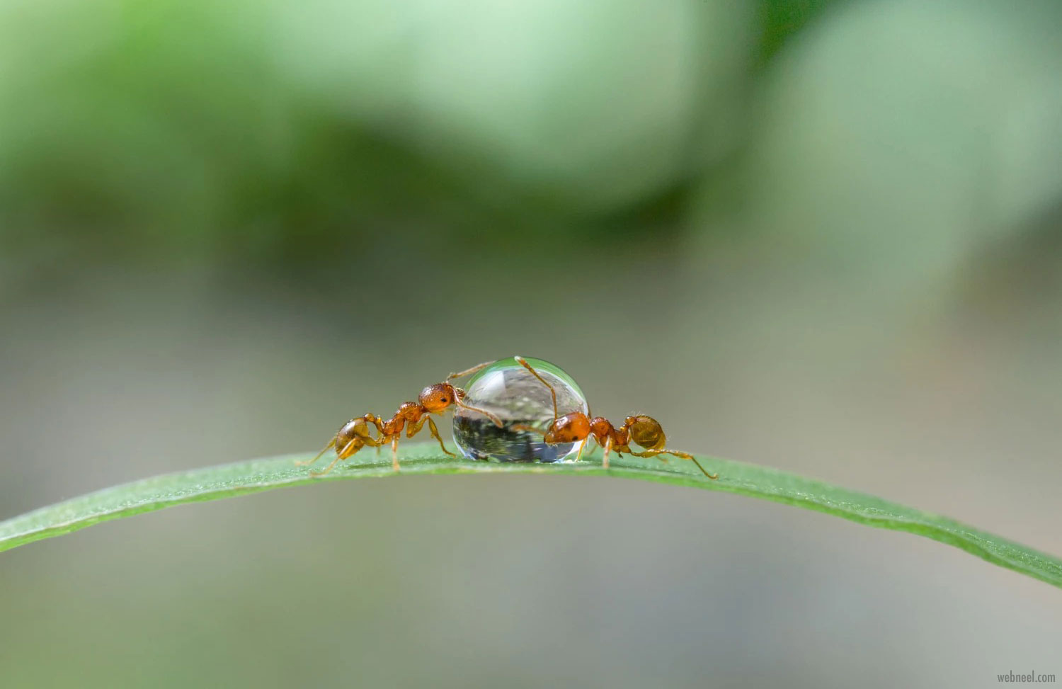 macro photography wallpaper ants by miki asai