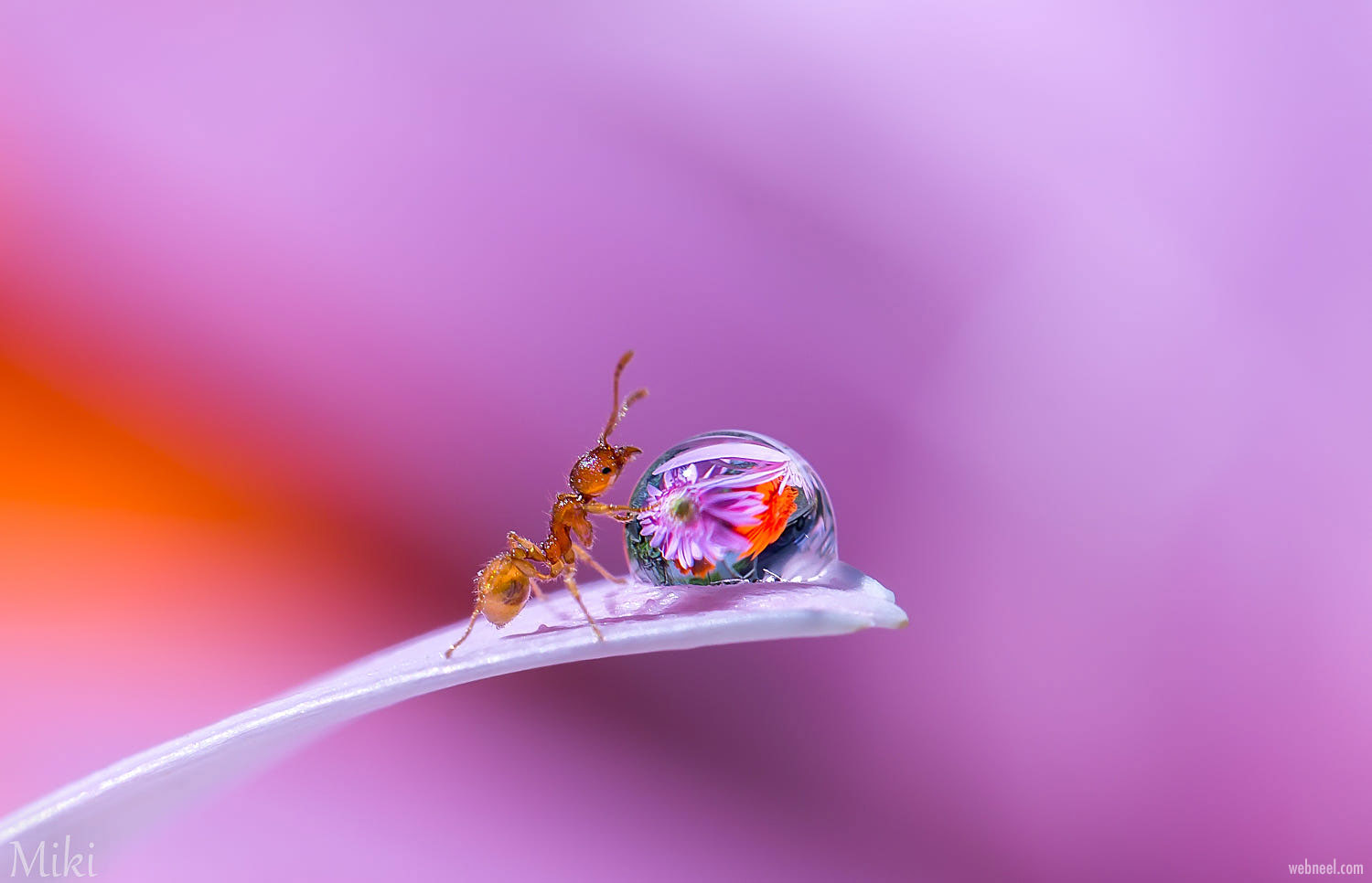 macro photography ant