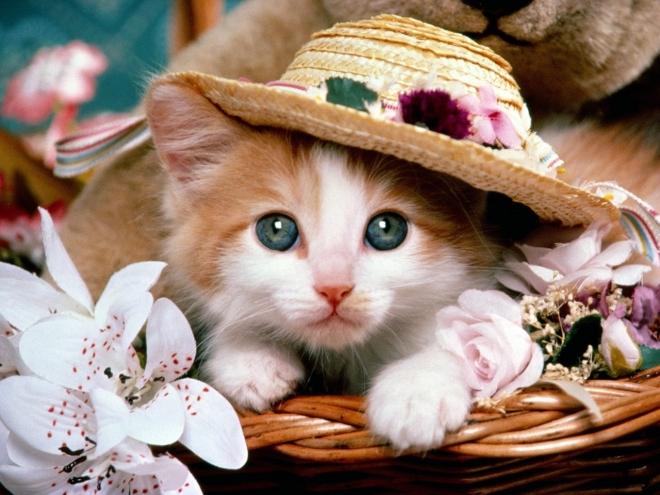 cat with a hat wallpaper