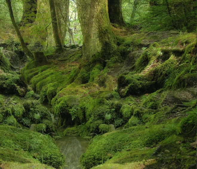 greeny forest wallpaper