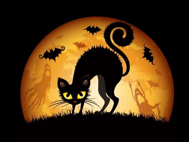 halloween cats bats hd wallpapers