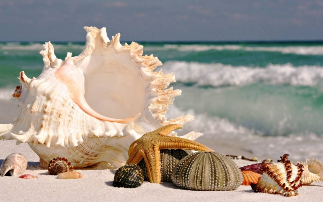 sea shells sea beach sand wallpaper