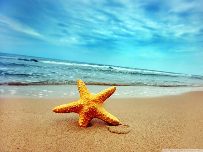 starfish sea beach sand wallpaper