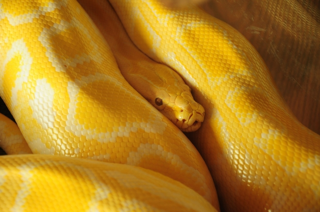 yellow wallpaper by yasser abusen